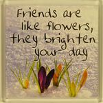 Fridge Magnet 038 Friends are like flowers, they brighten your day