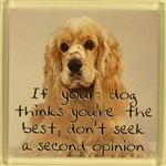 Fridge Magnet 041 If your dog thinks youre the best, dont seek a second opinion