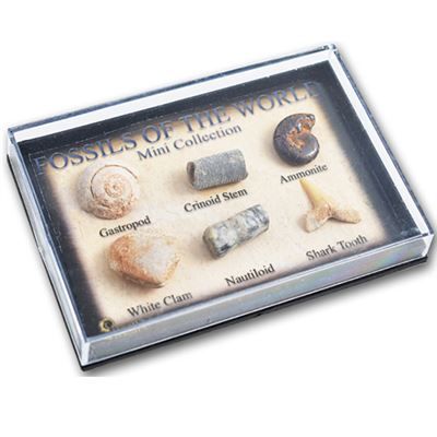 Fossils in Mini Display Case