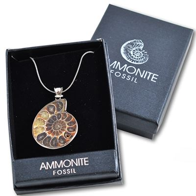 Ammonite Pendant in Gift Box